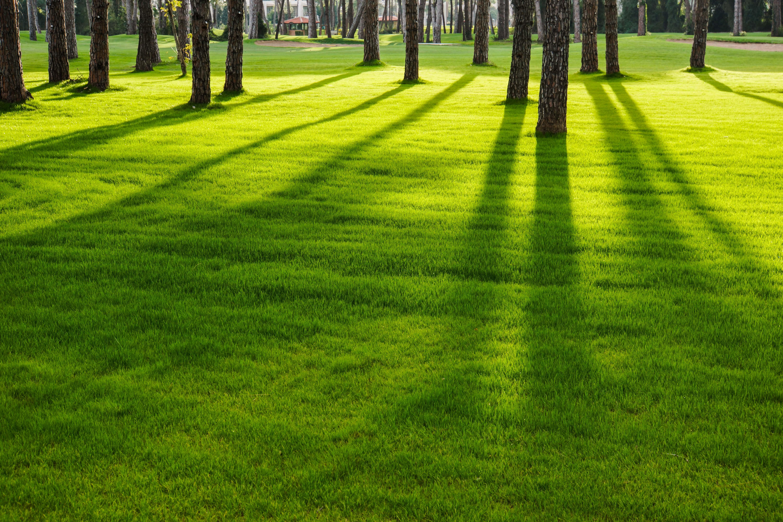 Geliebte Rasen säen – Neuanlage und Nachsaat, der Weg zum perfekten Rasen @IU_25
